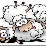 Счастливые овец не считают: боремся с бессонницей