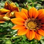 Лучший подарок девушке – доставка цветов на дом